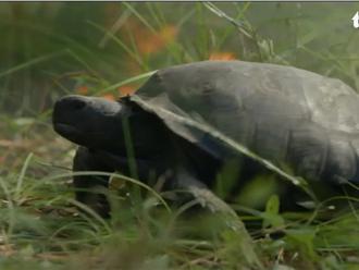 Chuyện thật như đùa: Rùa vàng 'giải cứu' 350 loài vật khác khỏi trận cháy rừng