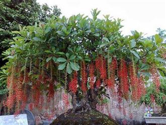 Người giàu chẳng bao giờ tiết lộ: 6 loại cây trồng trước cửa nhà tăng lộc khí giàu có, con cái hiếu thuận