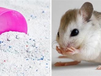 Chỉ vài thìa bột giặt bạn đã có thể đuổi cả đàn chuột chạy xa